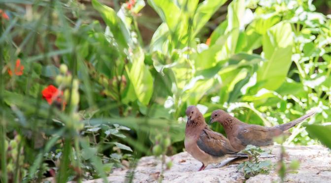 Bild på ett par fåglar